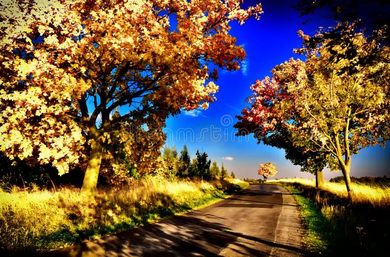 Maple trees with coloured leafs along asphalt road at autumn/fall daylight. Countryside landscape, sunlight,blue sky. Czech Republic,Europe. HDR image stock photography