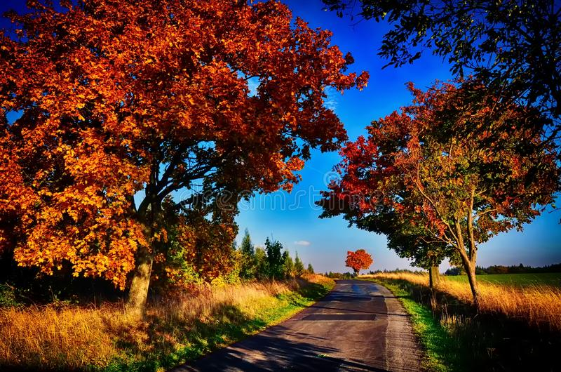 Maple trees with coloured leafs along asphalt road at autumn/fall daylight. Magical countryside landscape, sunlight,blue sky. Czech Republic,Europe. HDR image royalty free stock photography