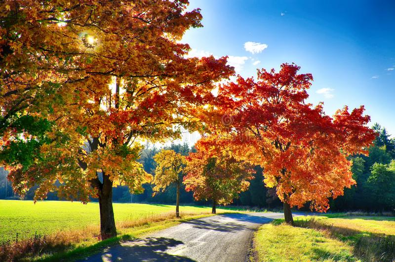 Maple trees with coloured leafs along asphalt road at autumn/fall daylight. Positive atmosphere. Magical countryside landscape, sunlight,blue sky. Czech royalty free stock images