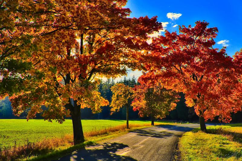 Maple trees with coloured leafs along asphalt road at autumn/fall daylight. Positive atmosphere. Magical countryside landscape, sunlight,blue sky. Czech stock images