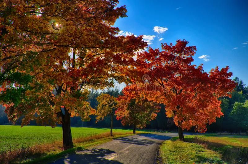 Maple trees with coloured leafs along asphalt road at autumn/fall daylight. Positive atmosphere. Magical countryside landscape, sunlight,blue sky. Czech royalty free stock photo