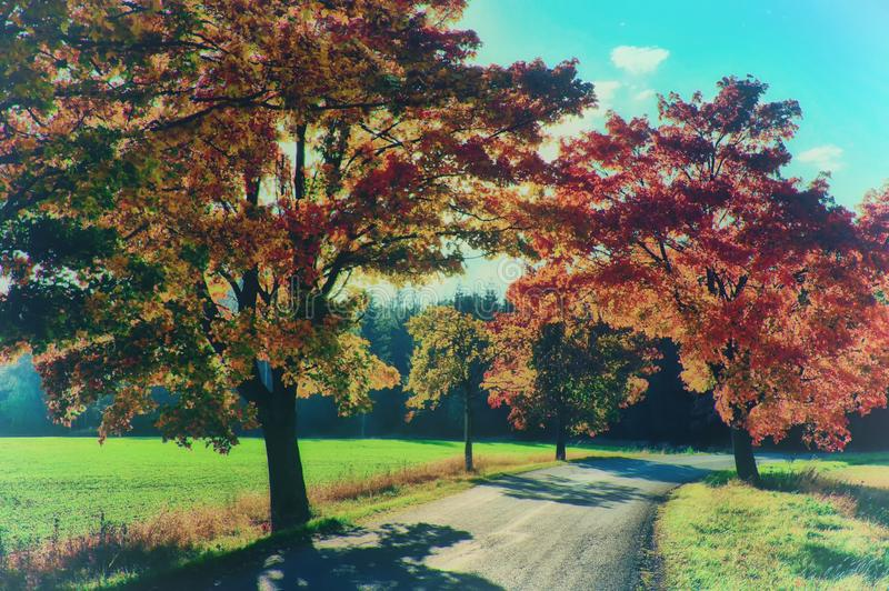 Maple trees with coloured leafs along asphalt road at autumn/fall daylight. Positive atmosphere. Magical countryside landscape, sunlight,blue sky. Czech stock image