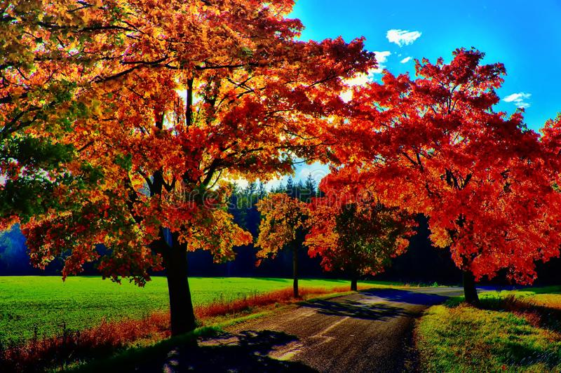Maple trees with coloured leafs along asphalt road at autumn/fall daylight. Positive atmosphere. Magical countryside landscape, sunlight,blue sky. Czech royalty free stock photography