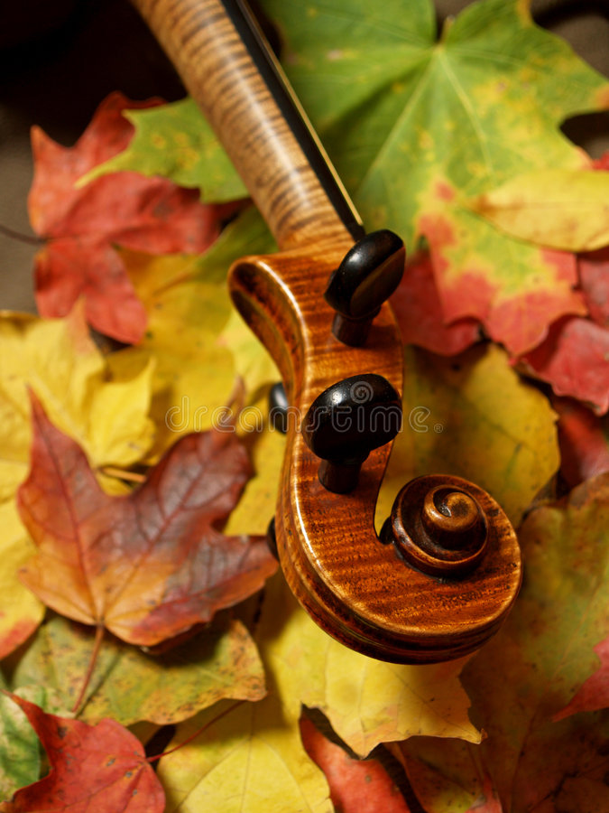 Download Maple Violin Scroll & Maple Leaves Stock Photo - Image: 4484136