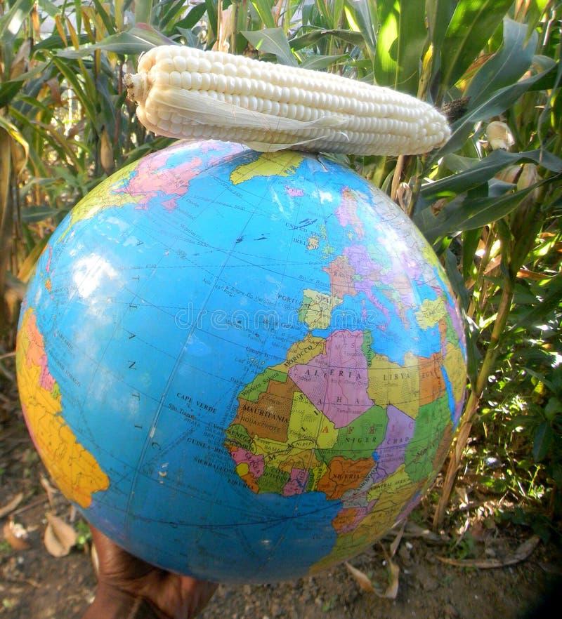 Mappa del globo del mondo con la pannocchia di granturco sulla cima immagini stock libere da diritti