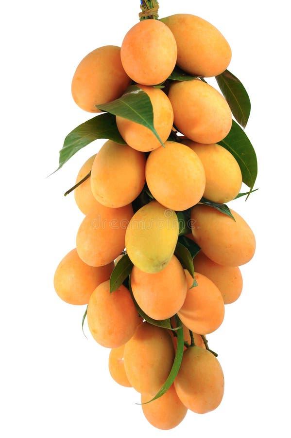 Maprang果子,泰国果子 图库摄影