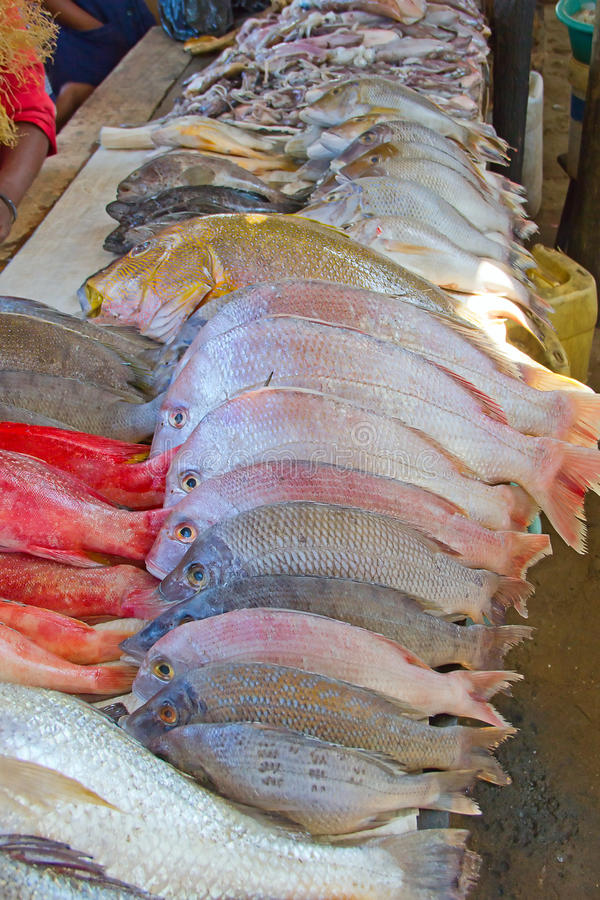 Download Maputo fish market stock image. Image of maputo, nutrition - 25106049