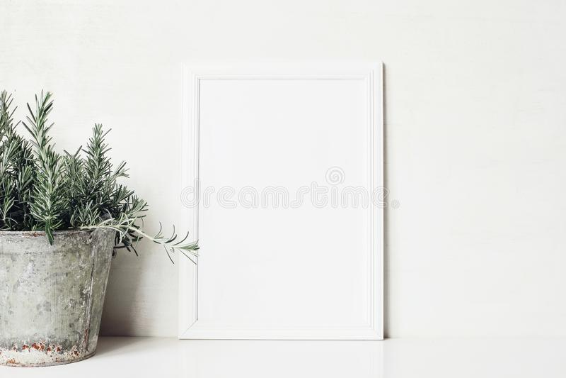 Maqueta en blanco vertical blanca del marco de madera con la hierba del romero en maceta vieja del metal en la tabla Cartel rústi fotografía de archivo