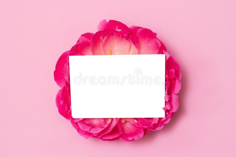 Maquette de carte de Minimalistic avec la fleur de pivoine Carte d'isolement Configuration plate photographie stock