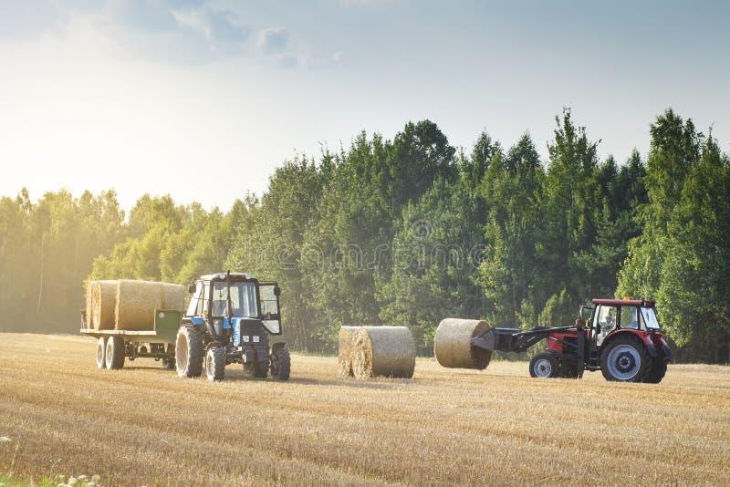 A maquinaria agrícola em um campo dourado chanfrado move pacotes do feno após ter colhido colheitas de grão O trator carrega paco foto de stock royalty free