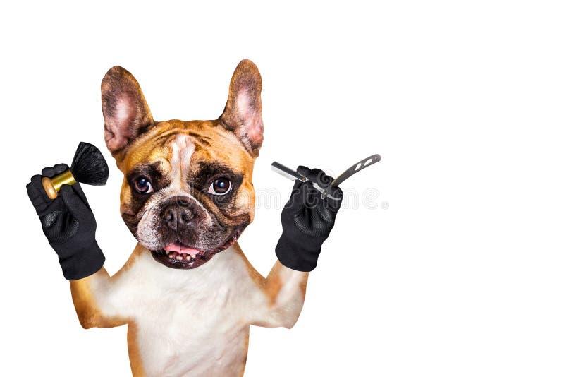Maquinilla de afeitar recta y cepillo del perro del jengibre del dogo francés del peluquero del control divertido del groomer Hom foto de archivo
