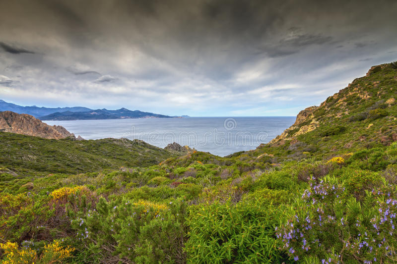 Maquis and coastline of Corsica stock image