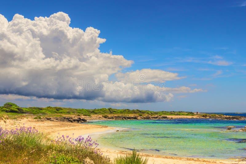 maquis mediterrâneos Costa de Salento: Praia de Lido Marini (Lecce) Itália (Apulia) imagens de stock