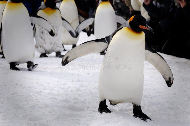 Março dos pinguins fotografia de stock royalty free
