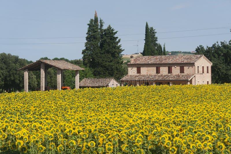 Marços (Italy) - ajardine no verão imagem de stock