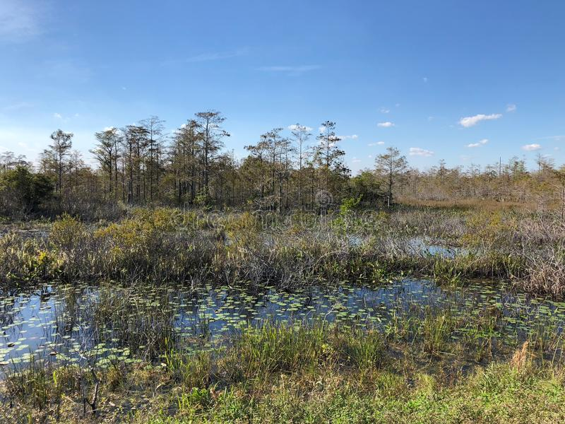 Marécage de la Floride photo stock