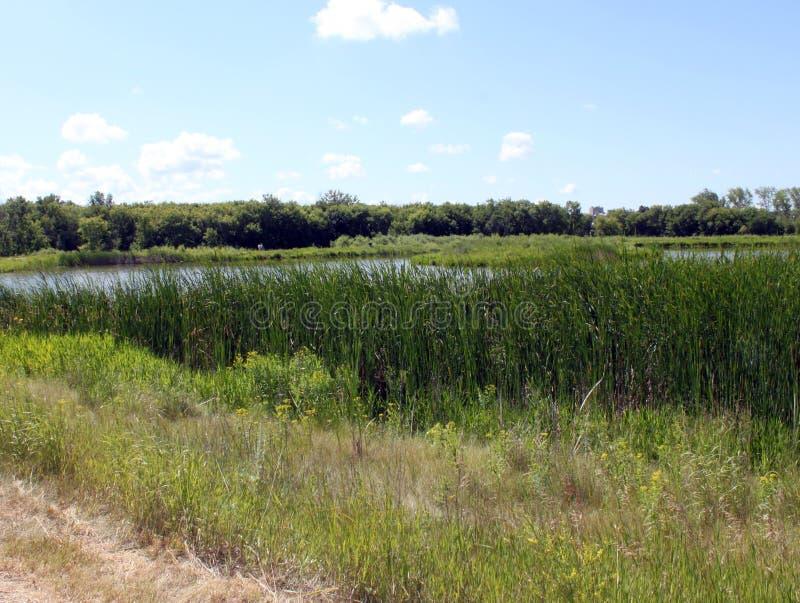 Marécage et traînées, Brandon Riverbank Discovery Center images libres de droits