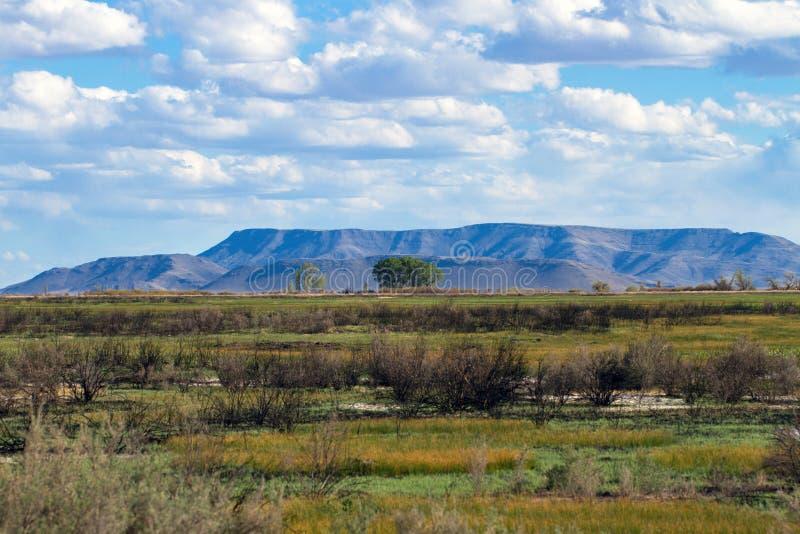 Marécages broussailleux avec une montagne à l'arrière-plan à la réserve nationale d'Alamosa dans le Colorado du sud image stock