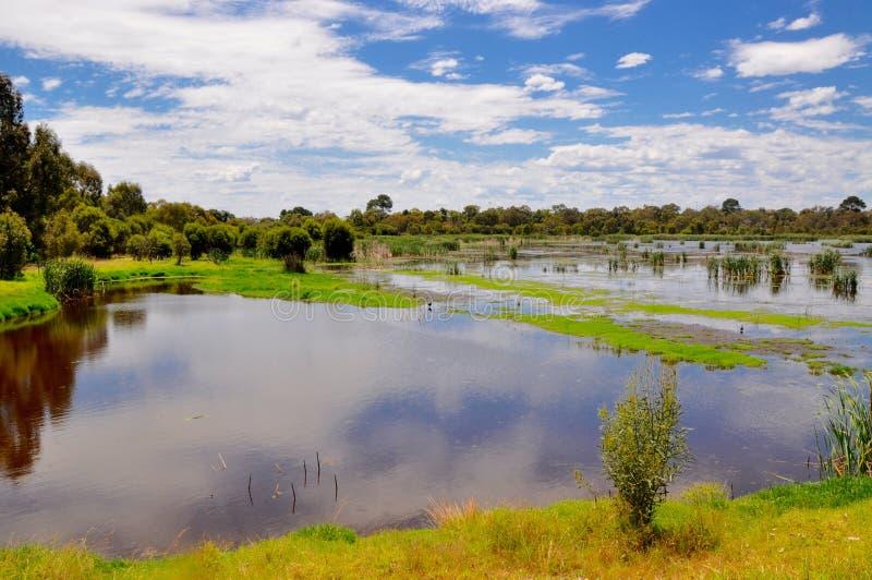 Marécages d'Australie occidentale photos stock