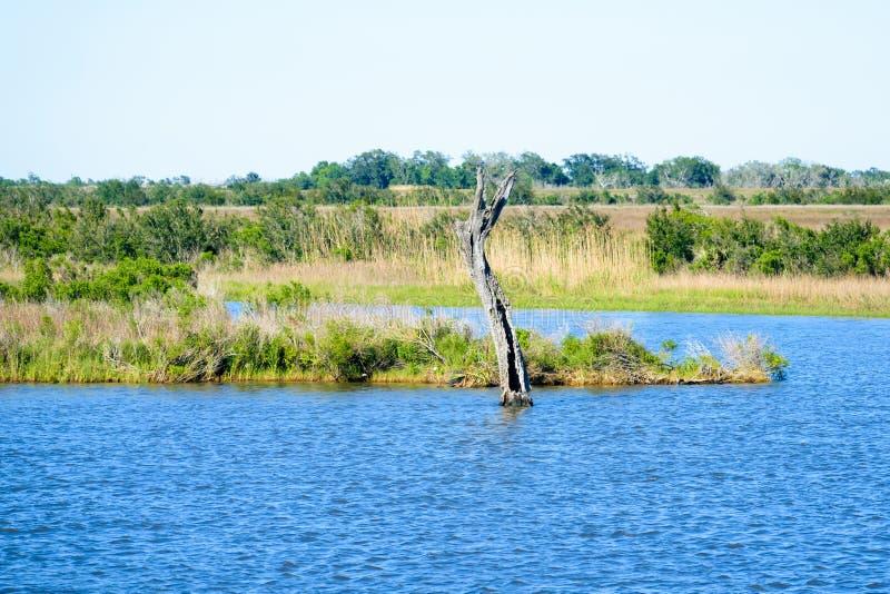Marécages de bayou de la Louisiane images libres de droits