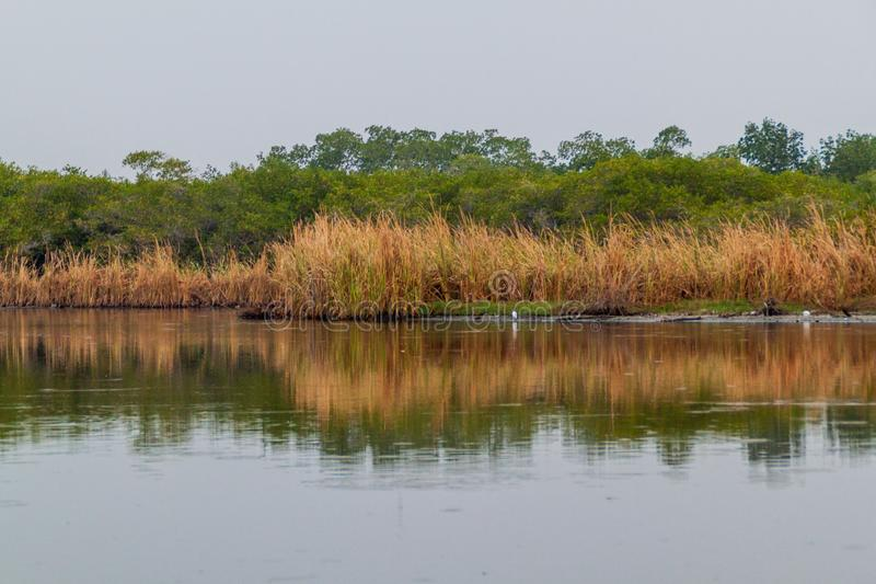 Marécages de la réservation Biotopo Monterrico-Hawaï, Guatema de faune photographie stock libre de droits