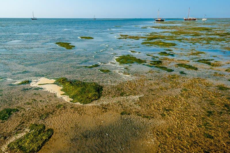Marécages de marais de sel image libre de droits