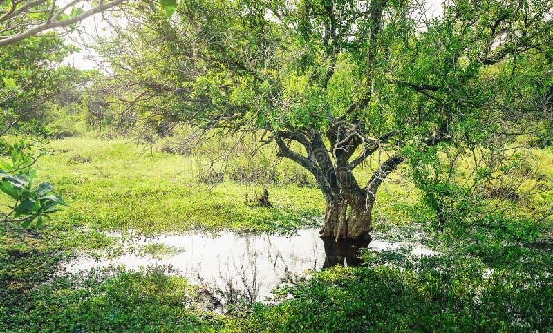 Marécages de Pantanal au Brésil photographie stock