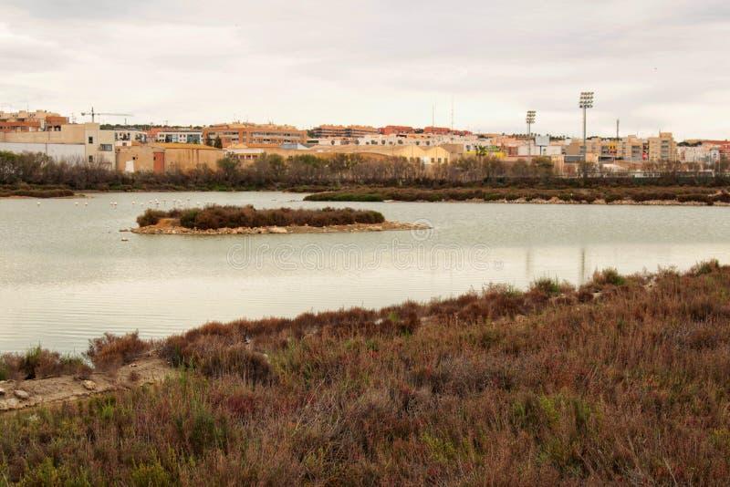 Marécages de Santa Pola image libre de droits