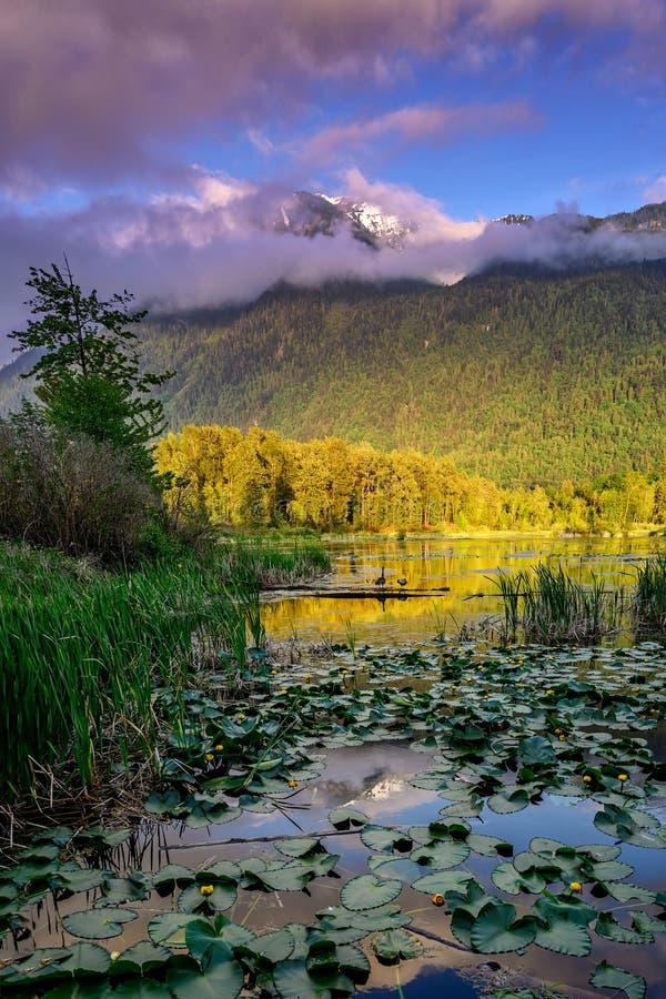 Marécages parc régional, Rosedale, la Colombie-Britannique, Canada de lac Cheam image stock