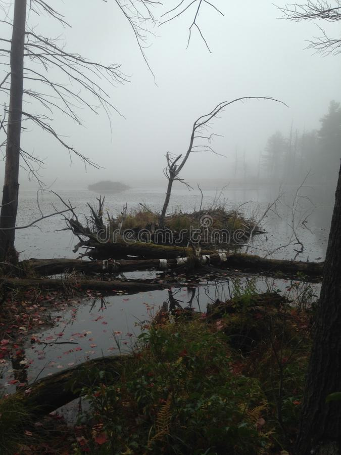 Marécages rampants d'automne photographie stock