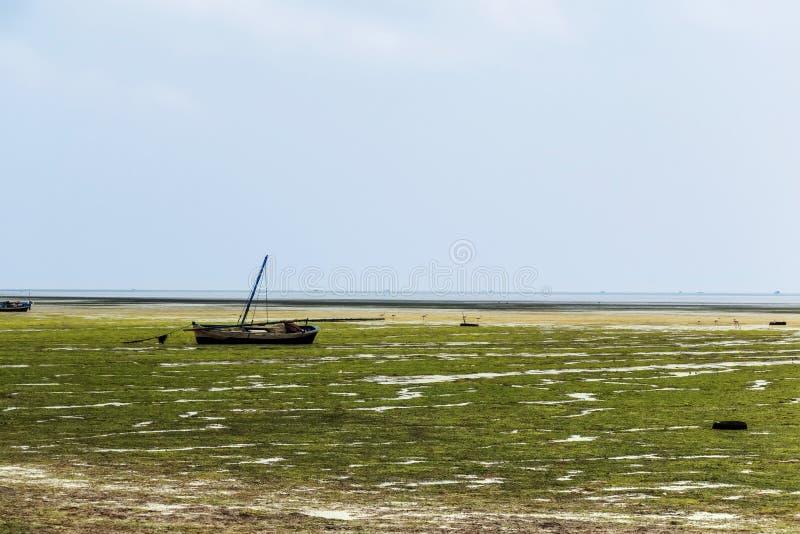 Marée inférieure sur la plage photographie stock libre de droits