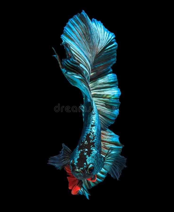 Mar azul imagen de archivo libre de regalías