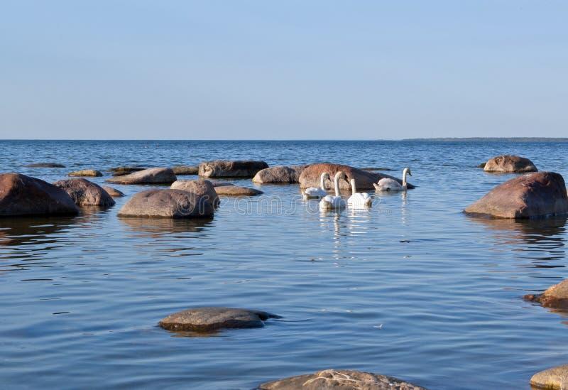 Mar Báltico imagens de stock royalty free