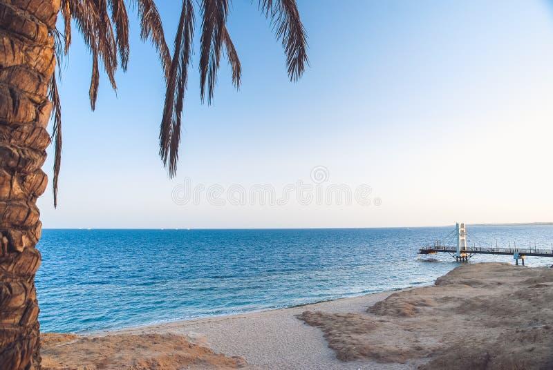Mar caliente amarillo de la arena y del verano con el cielo y espacio libre y la palmera en el primero plano Paisaje tropical de  imagenes de archivo