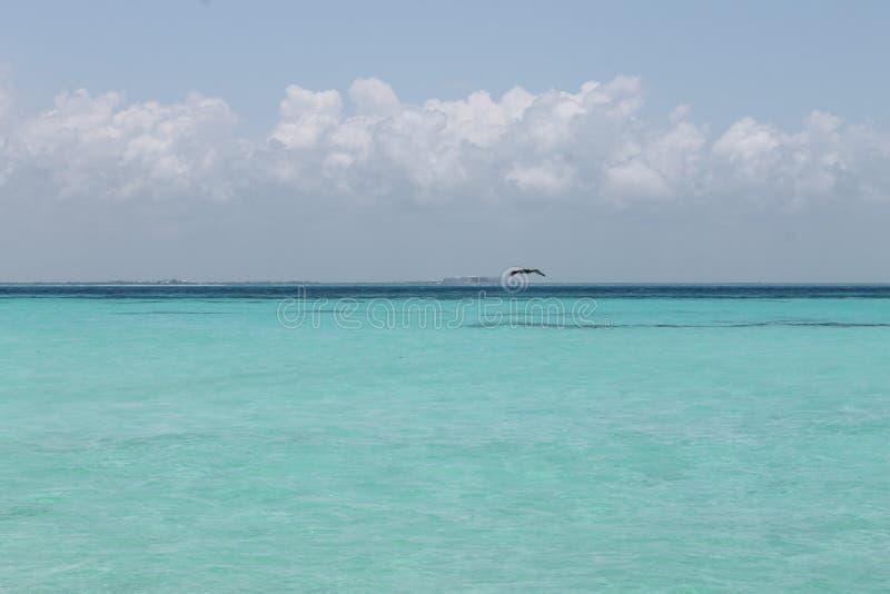 Mar carribian azul foto de stock