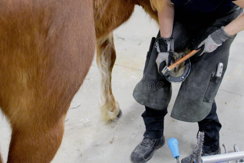 Mar?chal-ferrant Shoeing un cheval images stock