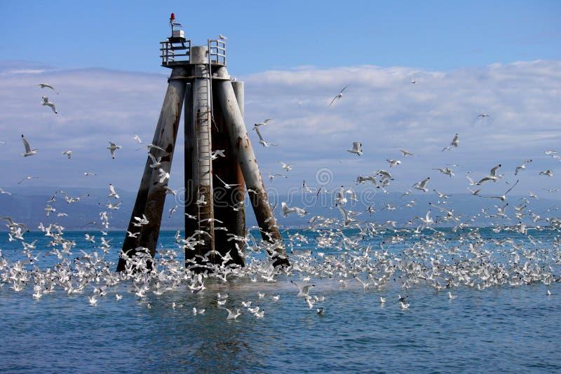 Mar, cielo y gaviotas en Alaska imágenes de archivo libres de regalías