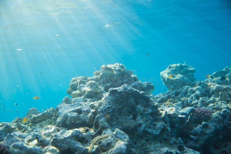 Mar, coral e peixes Coral sob a água imagem de stock royalty free