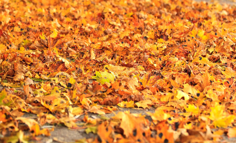 Mar das folhas secas da queda imagens de stock royalty free