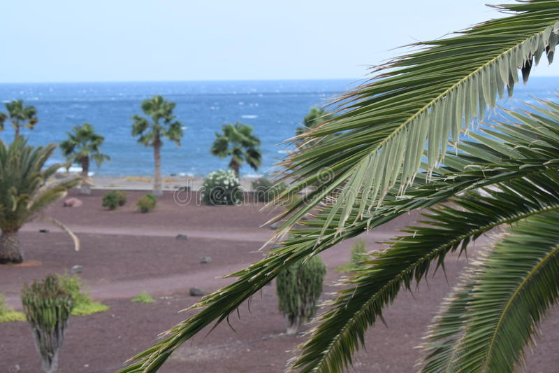 Mar de Fuerteventura imagem de stock royalty free