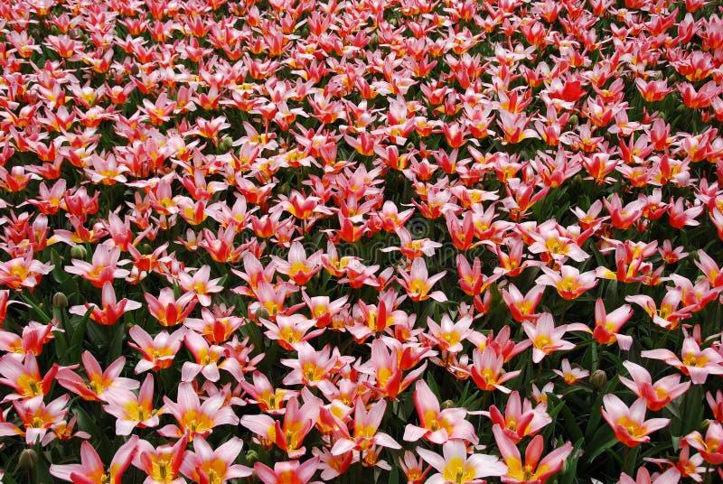 Mar de la flor foto de archivo