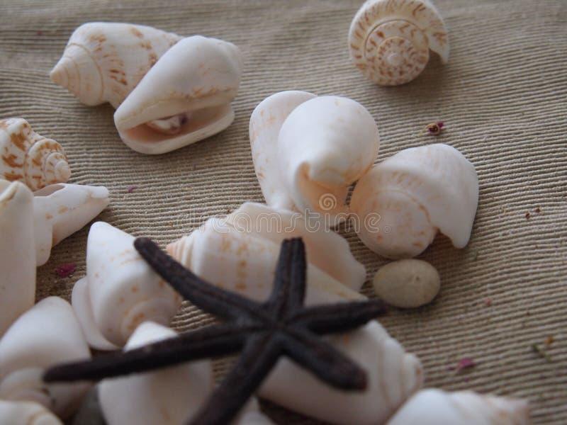 Mar de las cáscaras y de las estrellas de mar del mar imagenes de archivo