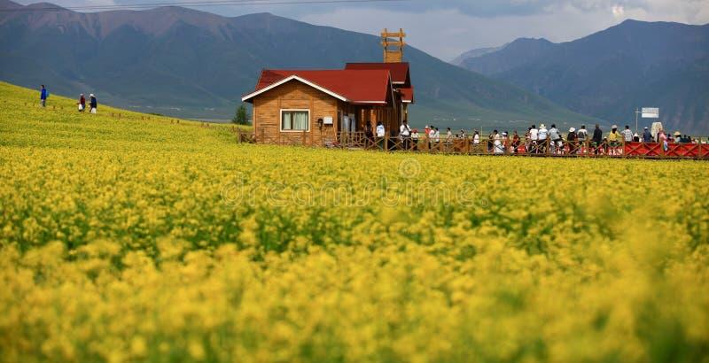 Mar de las flores de Menyuan en la provincia de Qinghai de China fotografía de archivo libre de regalías