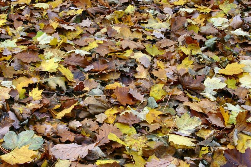 Mar de las hojas diversas de la caída fotos de archivo