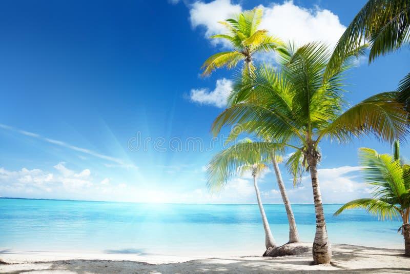 Mar del Caribe y palmas