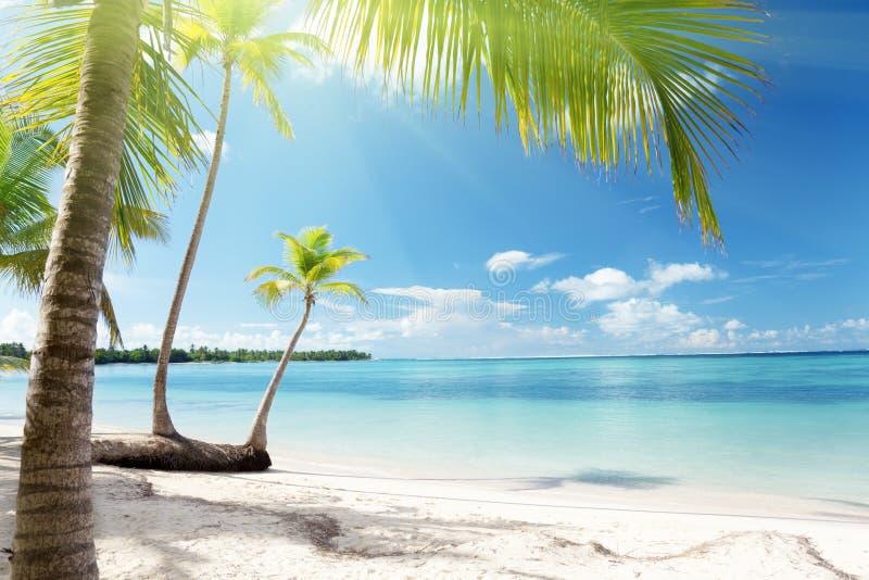 Mar del Caribe y palmas foto de archivo