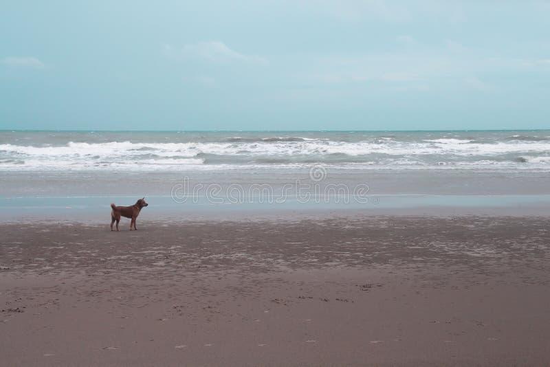 Mar del paisaje, cielo azul con la sola situación marrón del perro en fondo de la playa arenosa imagenes de archivo