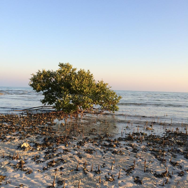 Mar, desierto, Abu Dhabi, UAE, Dubai fotos de archivo libres de regalías