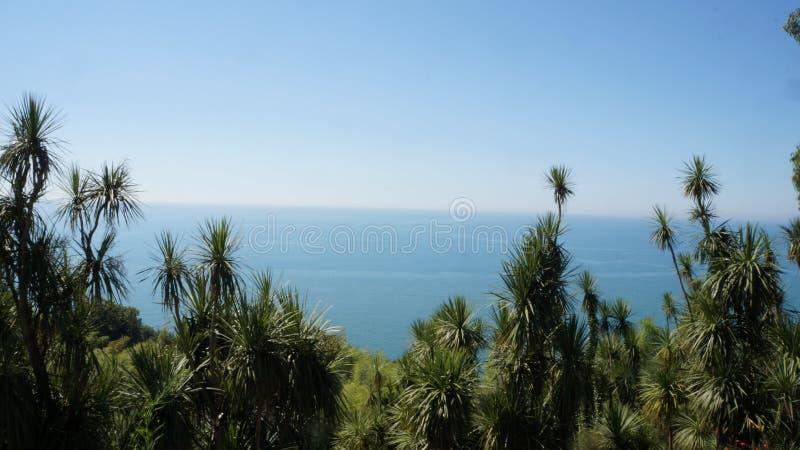 Mar detrás de árboles imagenes de archivo