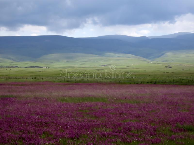 Mar distante da montanha e da flor foto de stock royalty free